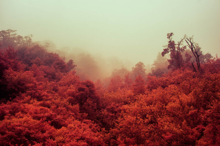 Yellow fog and red jungle.
