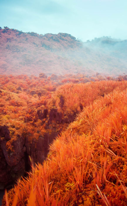 Red foliage, fog, rocks cutting indeterminate forms.