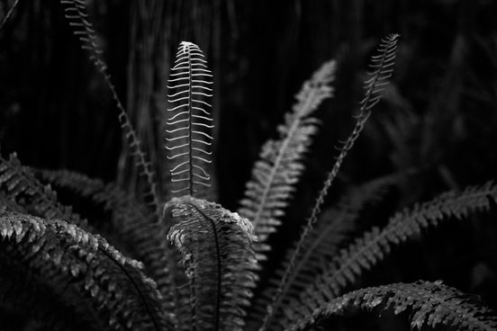 A bright white fern on a black background.